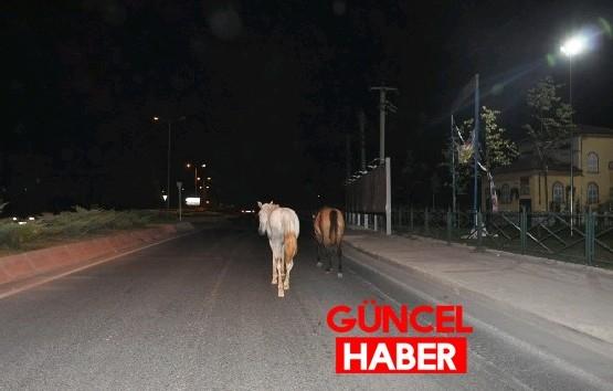 Yola Çıkan Atlar